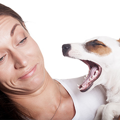 dog breath sniffers